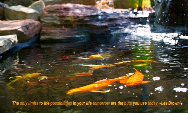 The only limits to the possibilities in your life tomorrow are the buts you use today. ~Les Brown