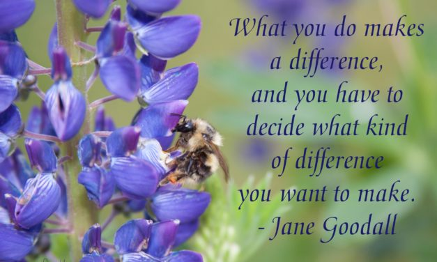 What you do makes a difference, and you have to decide what kind of difference you want to make. ~Jane Goodall