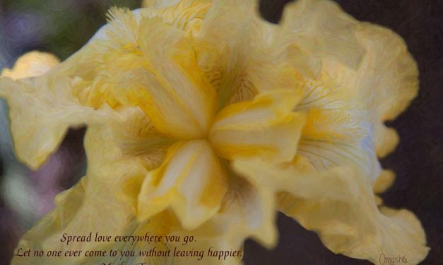Spread love everywhere you go. Let no one ever come to you without leaving happier. ~Mother Theresa